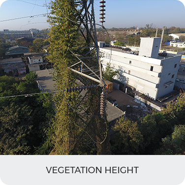 Vegetation height